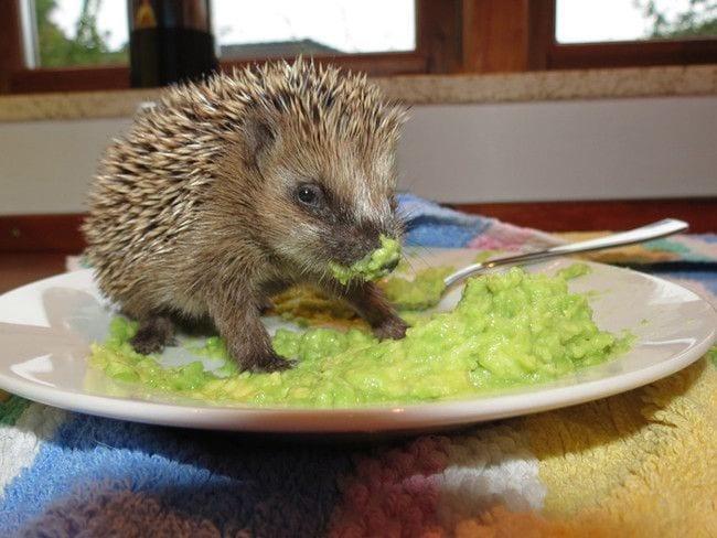 animales-comiendo-no-deben-13