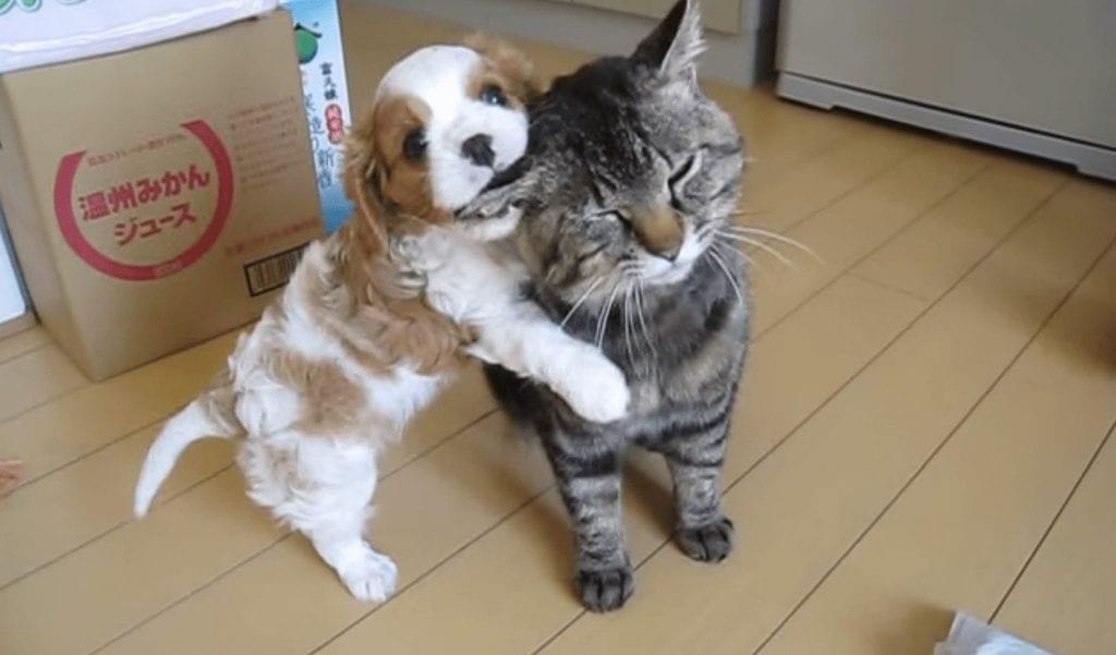 cachorro conociendo gato