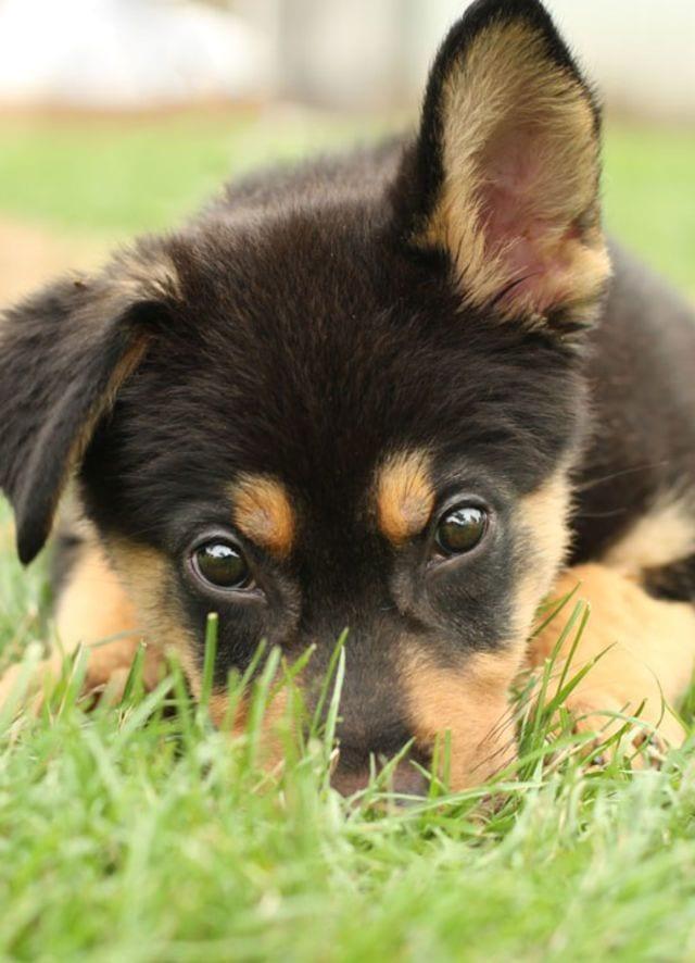cachorros-aprendiendo-09