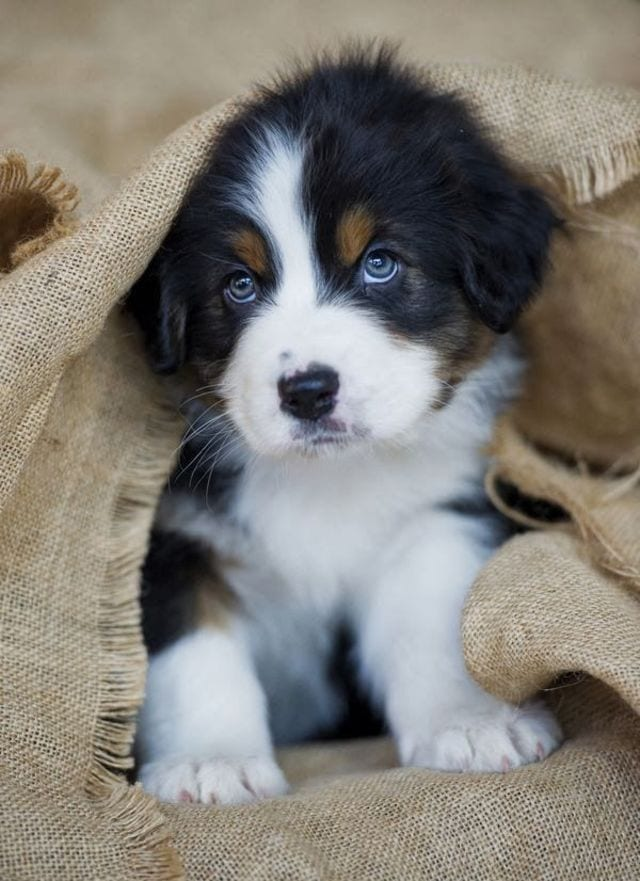 cachorros-aprendiendo-14