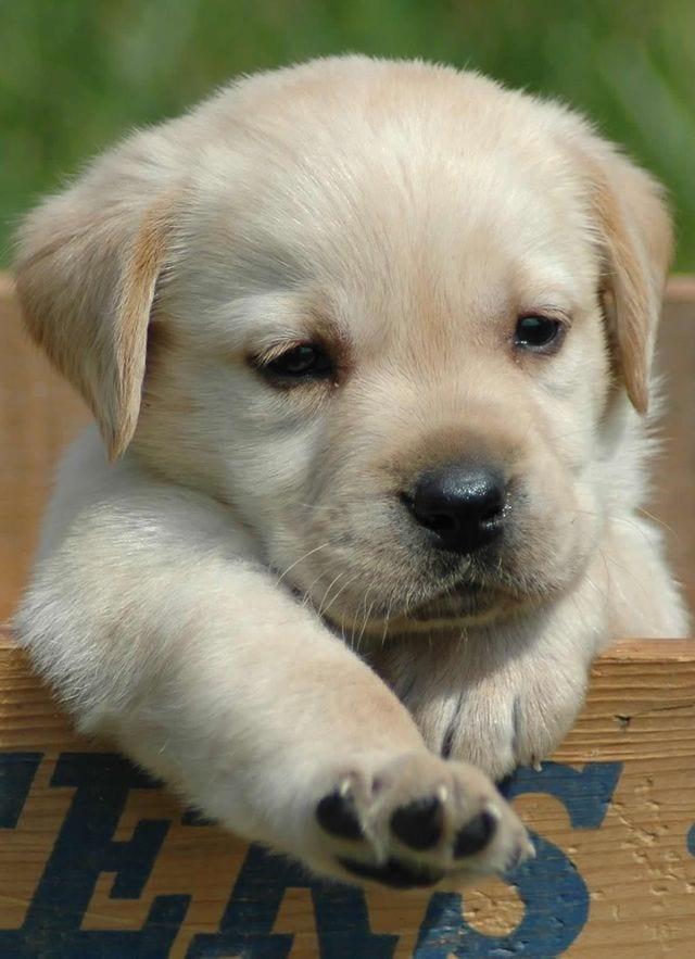 cachorros-aprendiendo-20