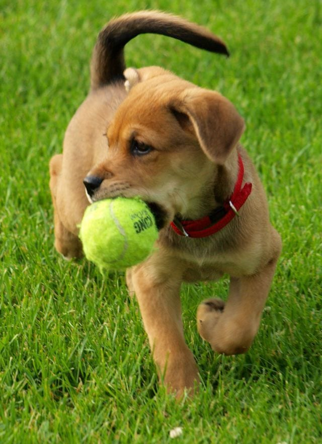 cachorros-aprendiendo-22