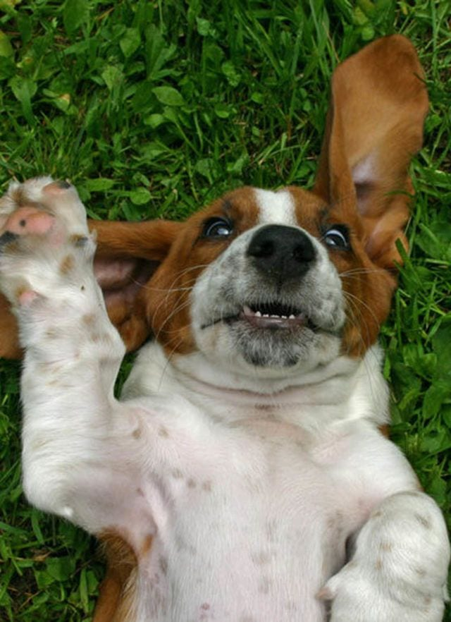 cachorros-aprendiendo-23