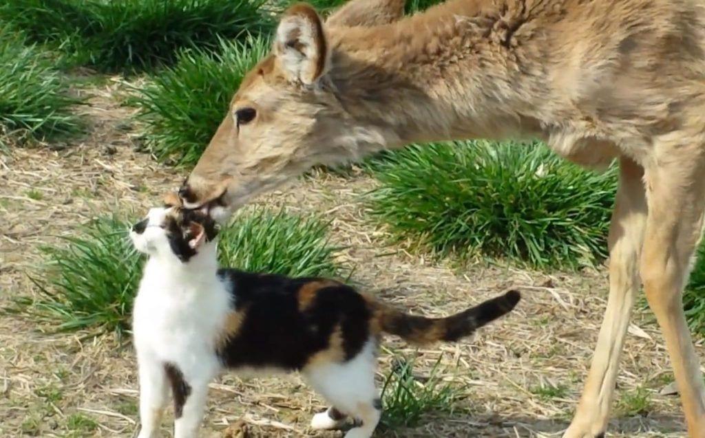 gato ciervo
