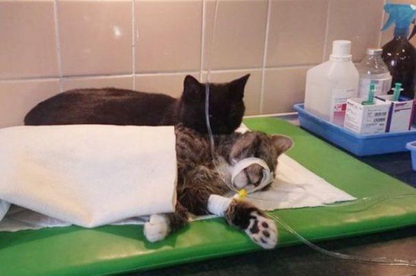 gato enfermero 2