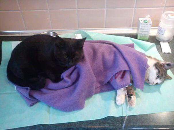 gato enfermero 3