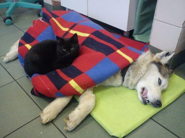 gato enfermero 5