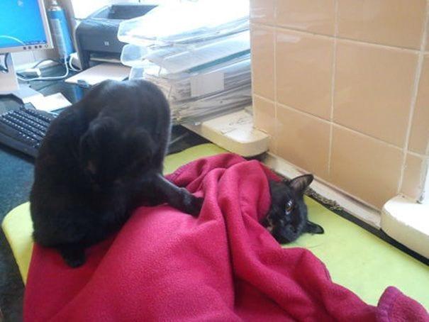gato enfermero 7