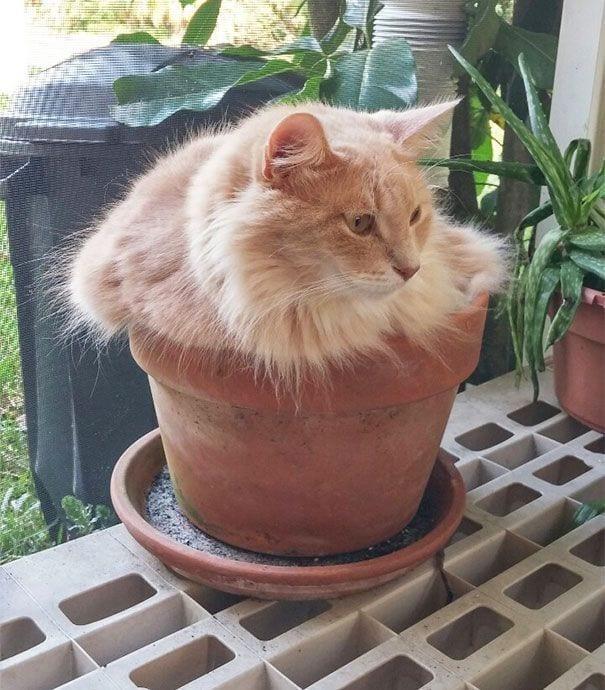 gatos en maceta 1