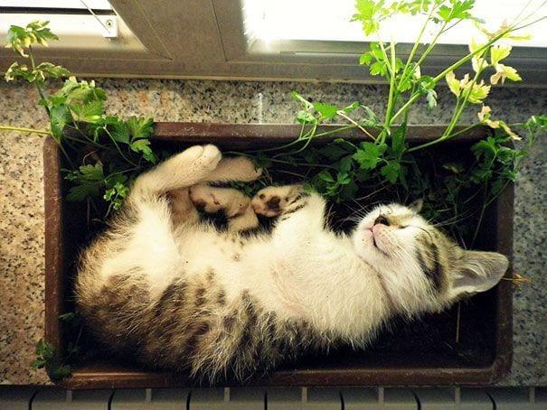 gatos en maceta 11