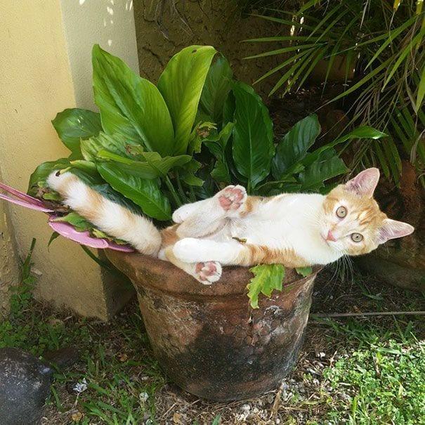 gatos en maceta 12