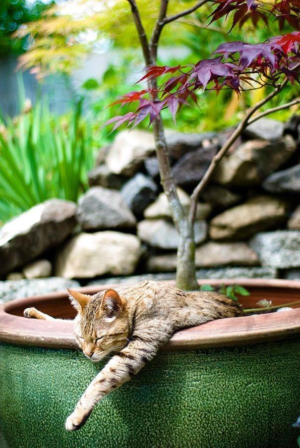 gatos en maceta 15