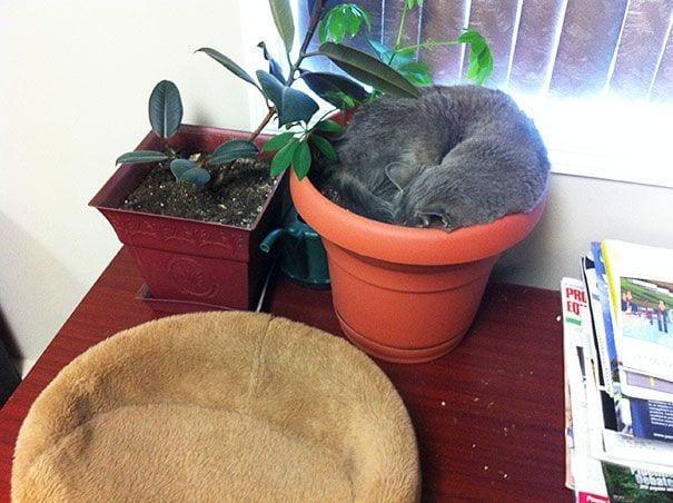 gatos en maceta 17