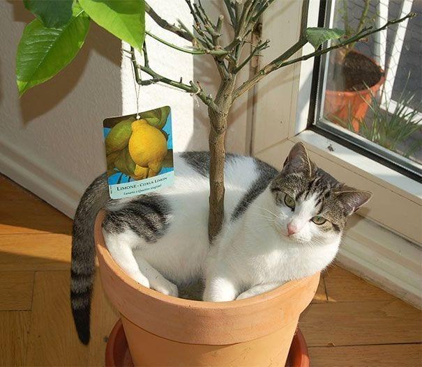 gatos en maceta 19