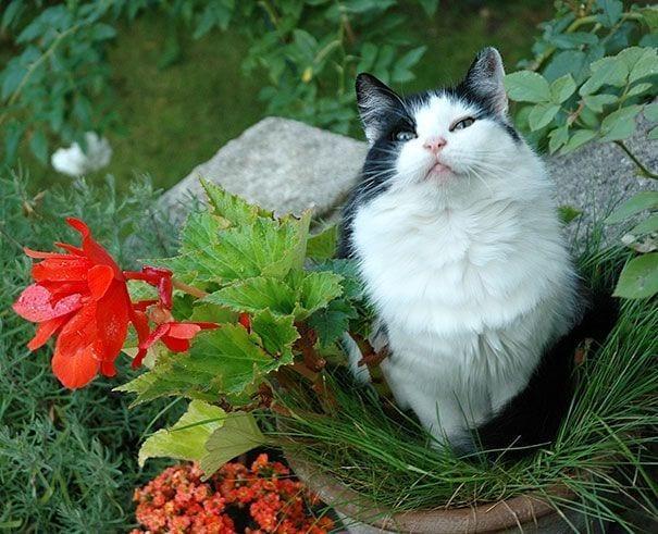 gatos en maceta 20