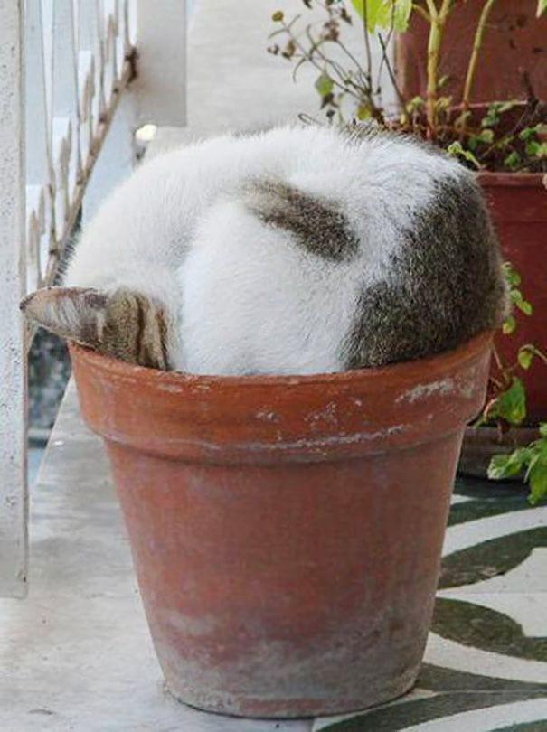 gatos en maceta 24