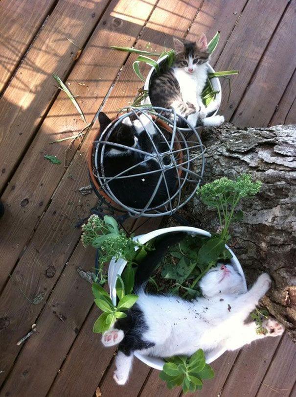 gatos en maceta 5
