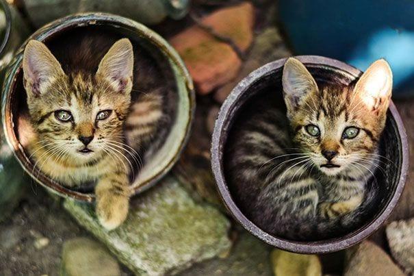 gatos en maceta 9