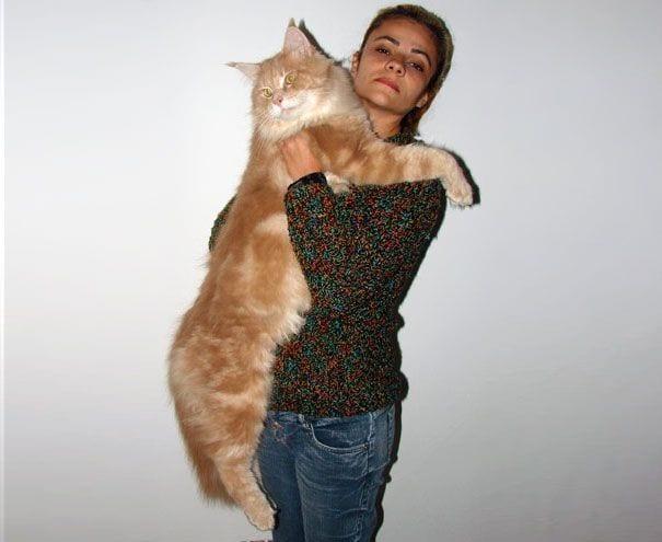 gatos gigantes 17
