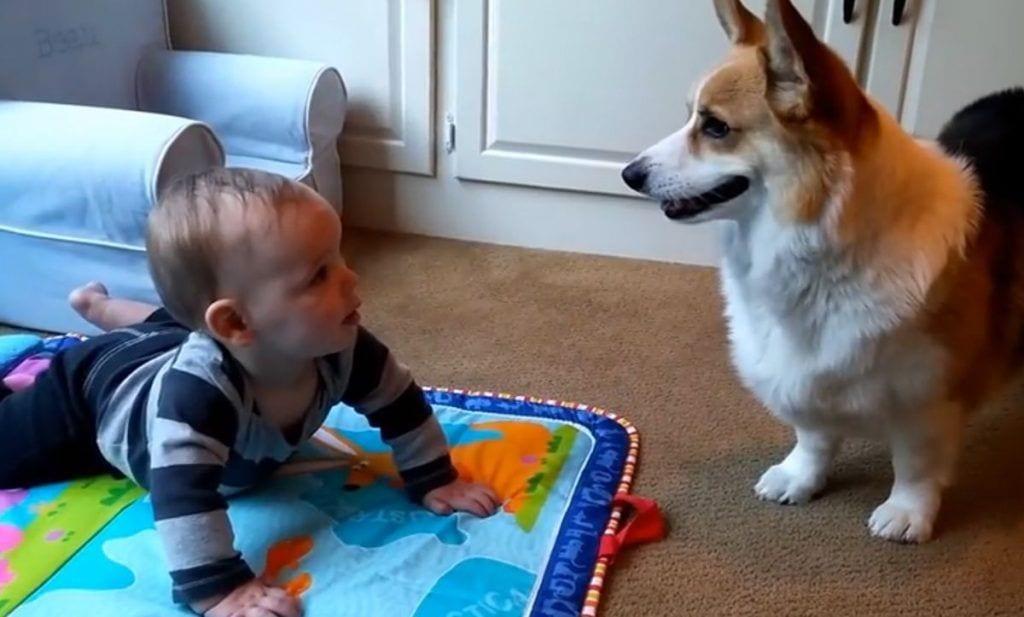 perro bebe jugando