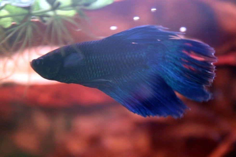 pez rehabilitado 10