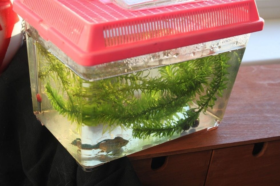 pez rehabilitado 3