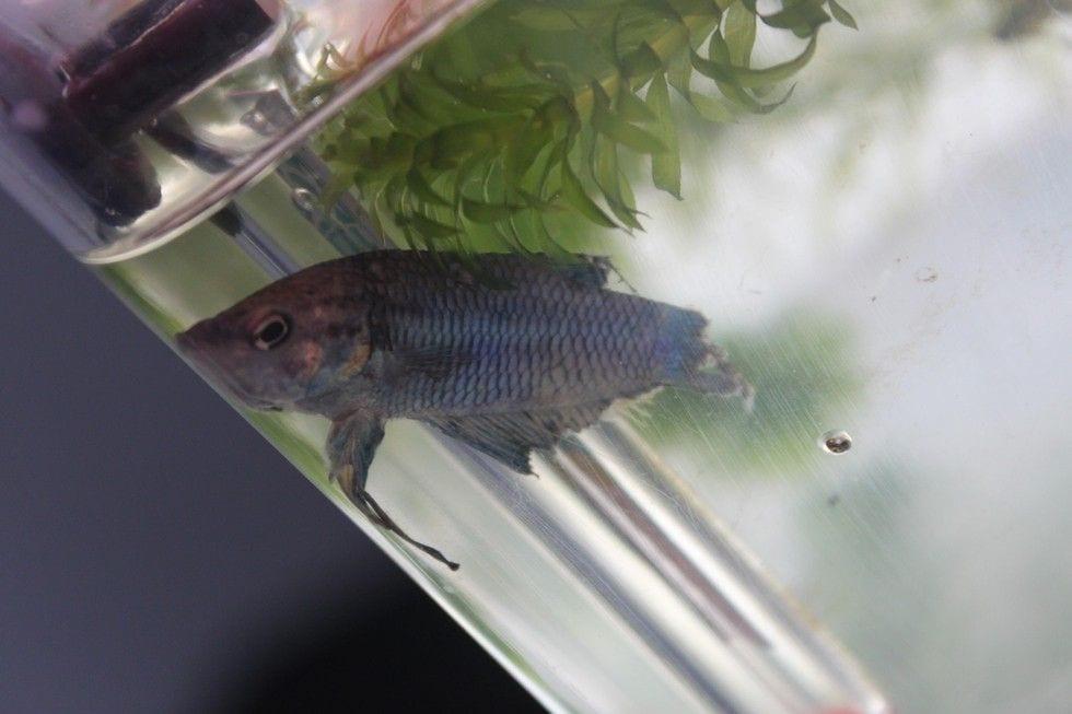 pez rehabilitado 4
