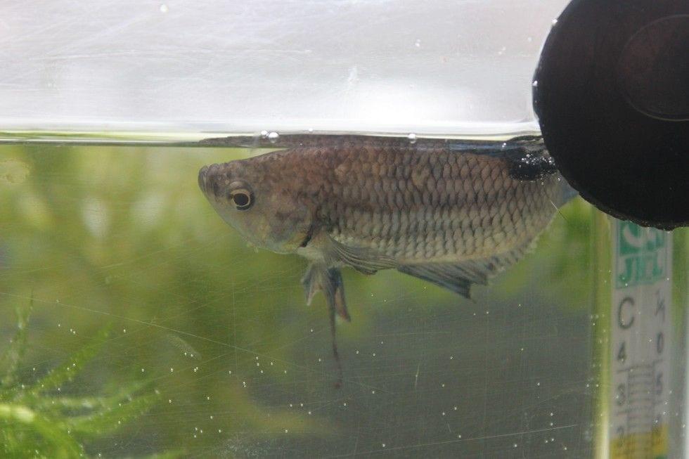 pez rehabilitado 5