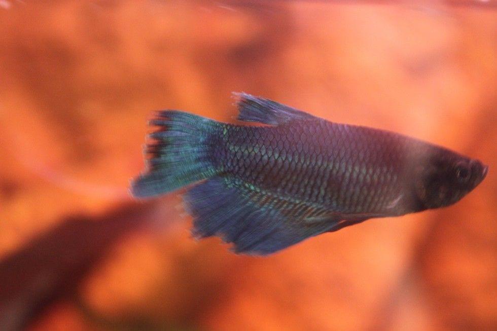 pez rehabilitado 7