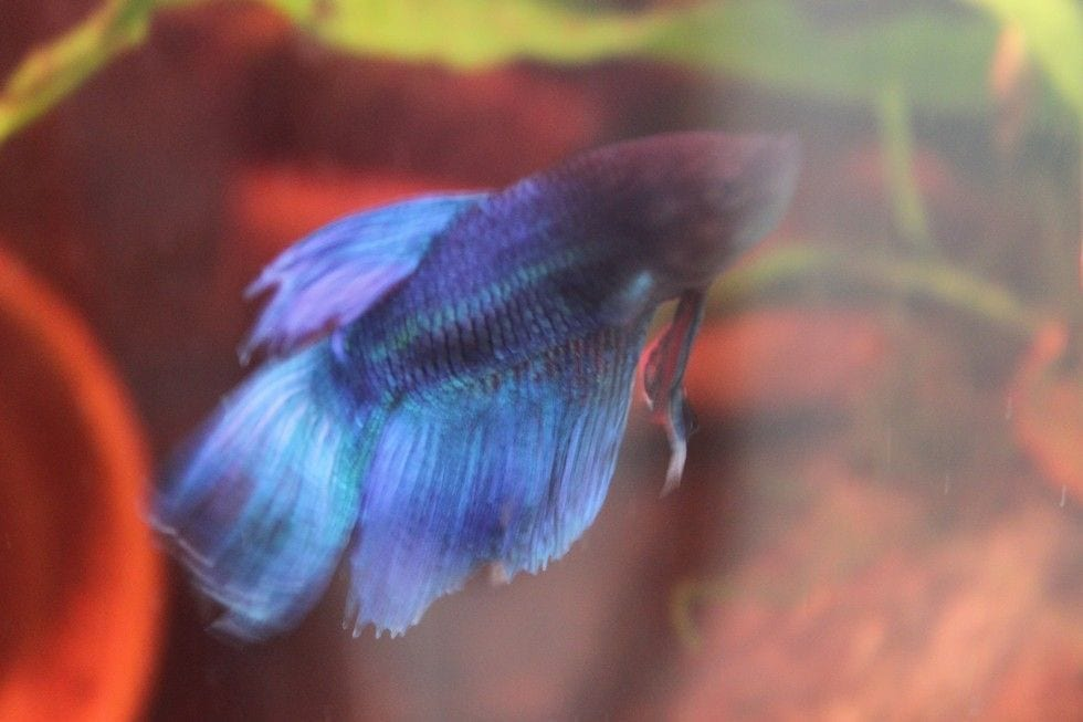pez rehabilitado 8