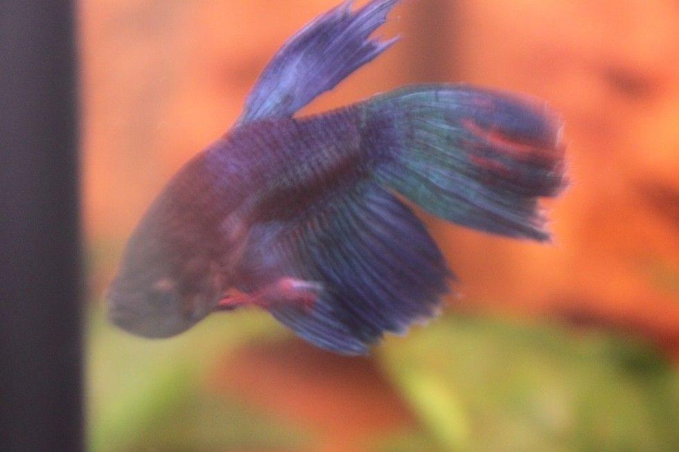 pez rehabilitado 9