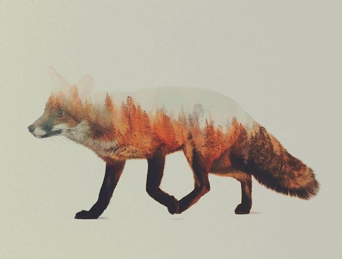 animales naturaleza01