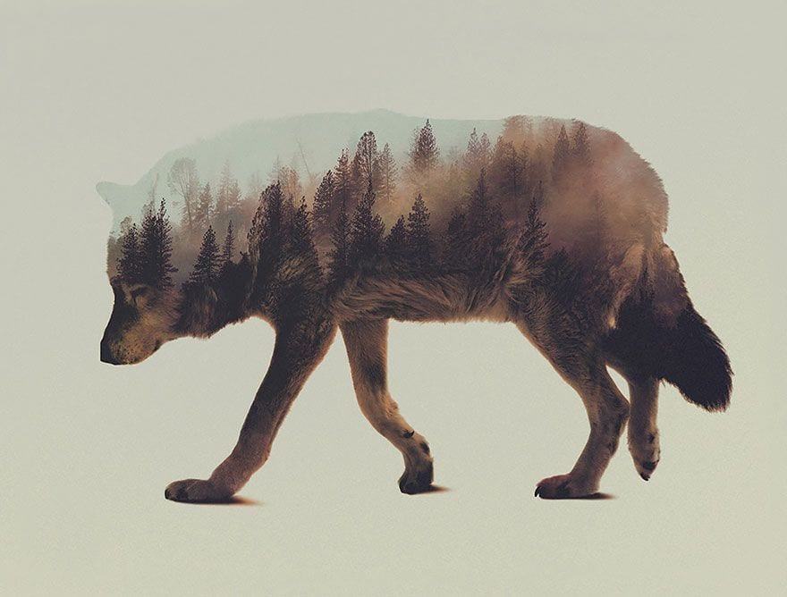 animales-naturaleza02