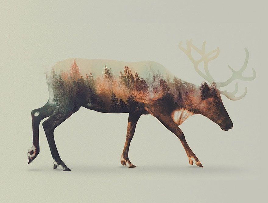animales-naturaleza03
