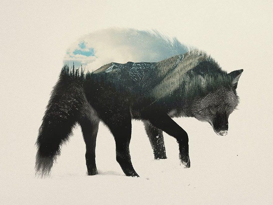 animales-naturaleza04