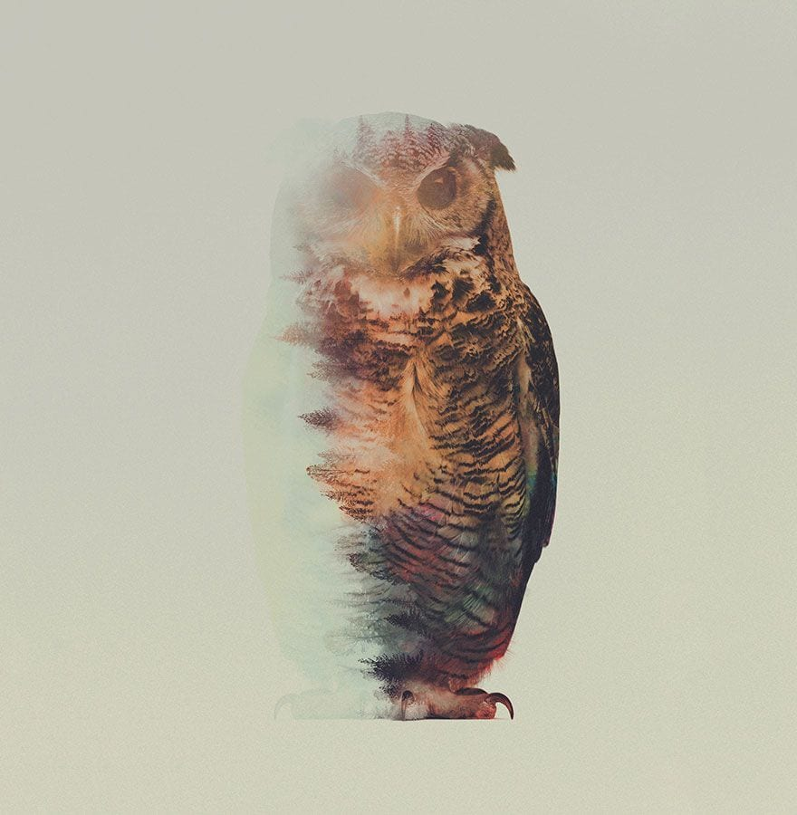 animales-naturaleza05