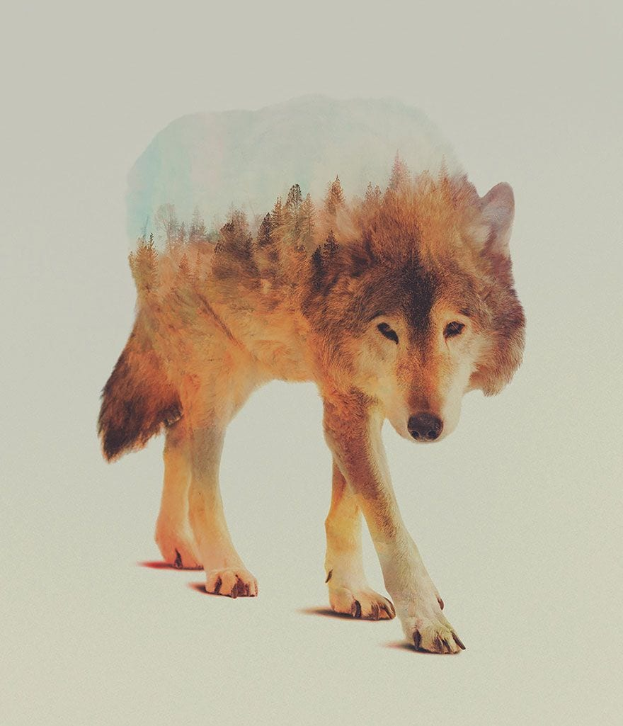 animales-naturaleza06