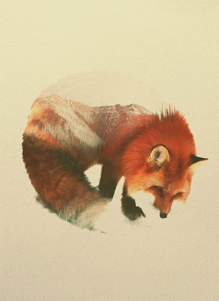 animales-naturaleza08