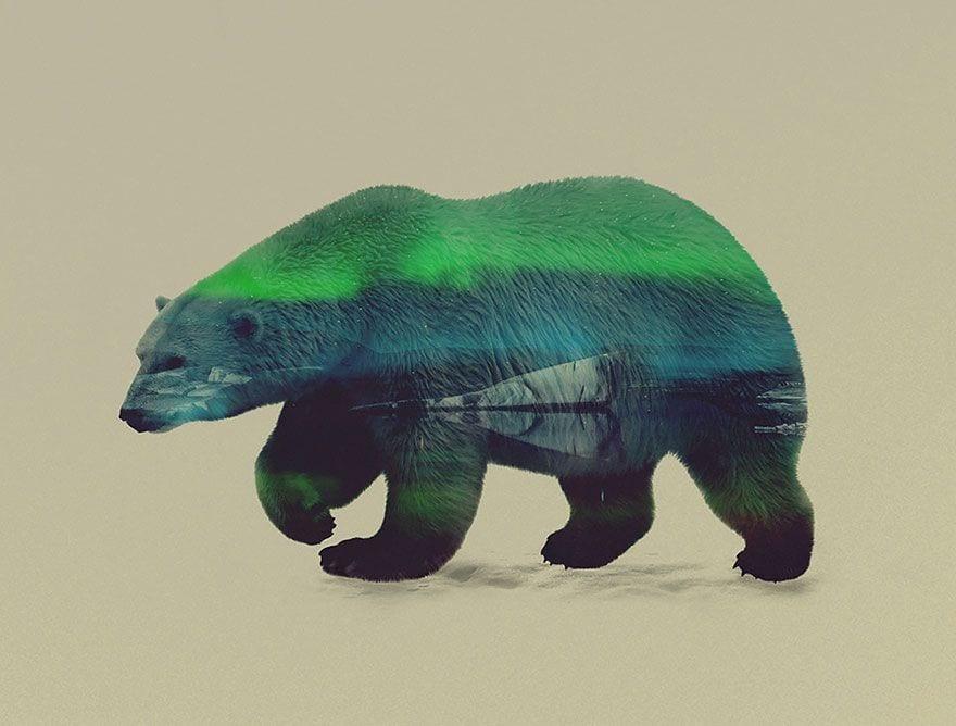 animales-naturaleza09