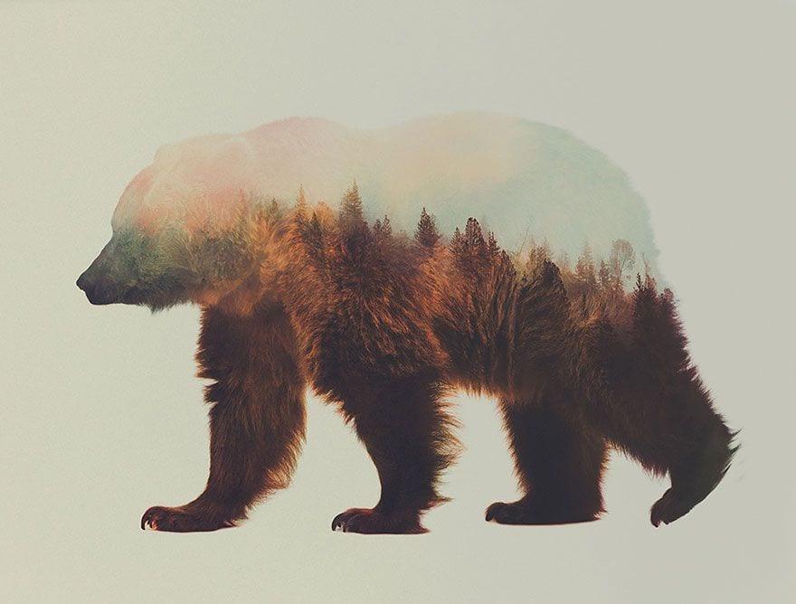animales-naturaleza10