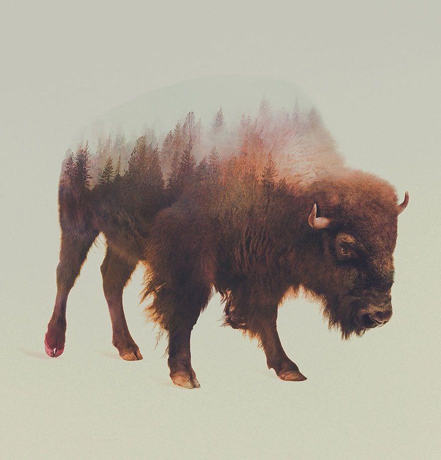 animales-naturaleza11