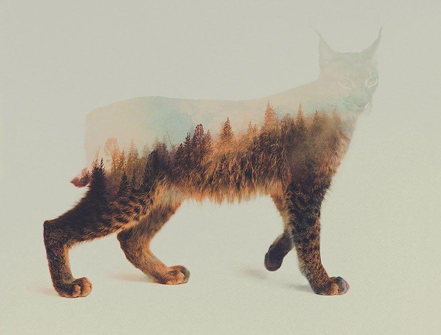 animales-naturaleza12