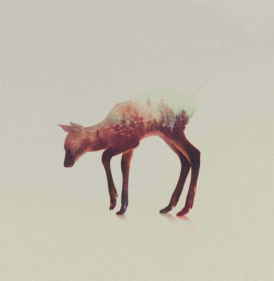 animales-naturaleza13