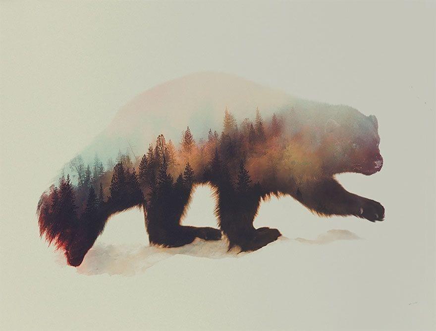 animales-naturaleza14