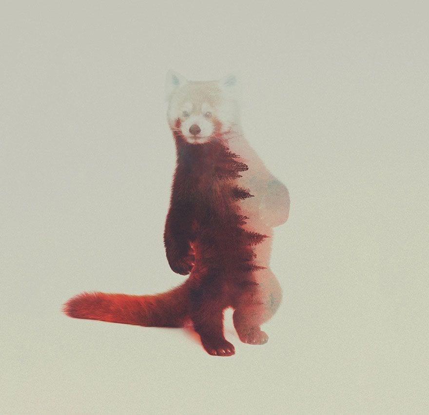animales-naturaleza15