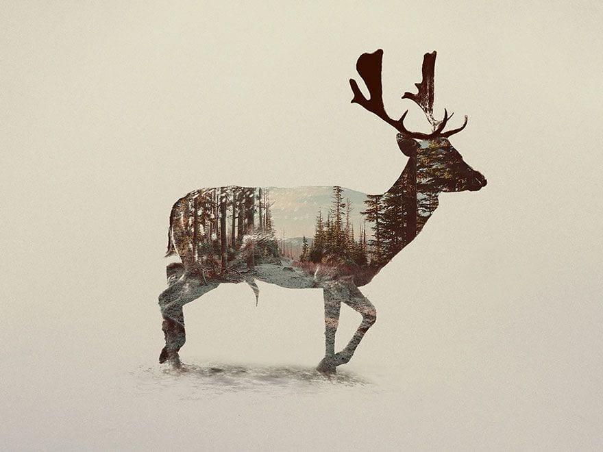 animales-naturaleza16