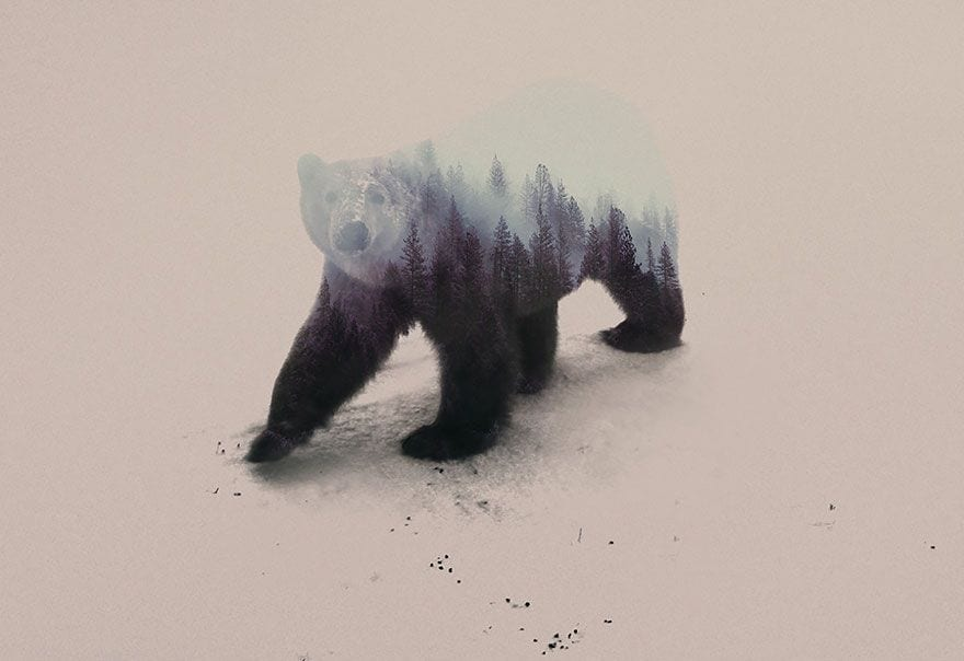 animales-naturaleza18