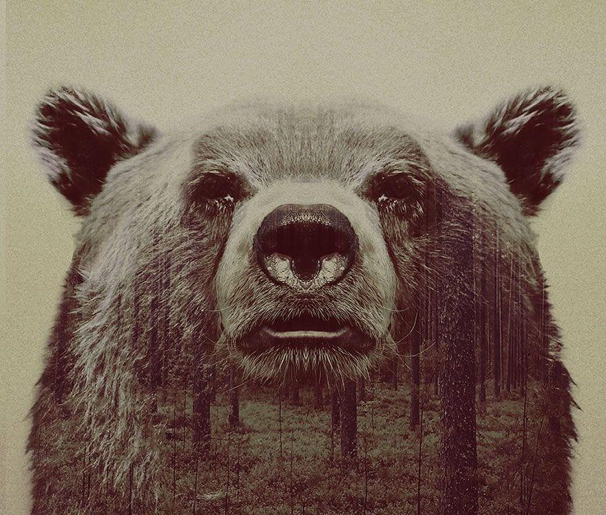 animales-naturaleza19