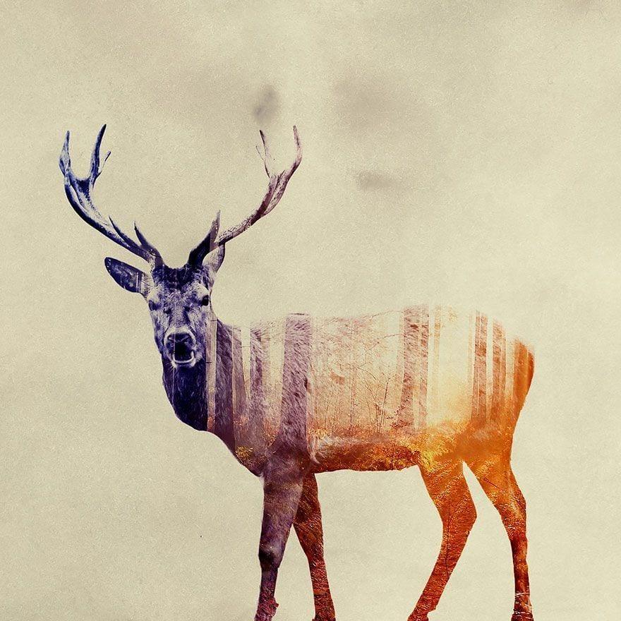 animales-naturaleza20