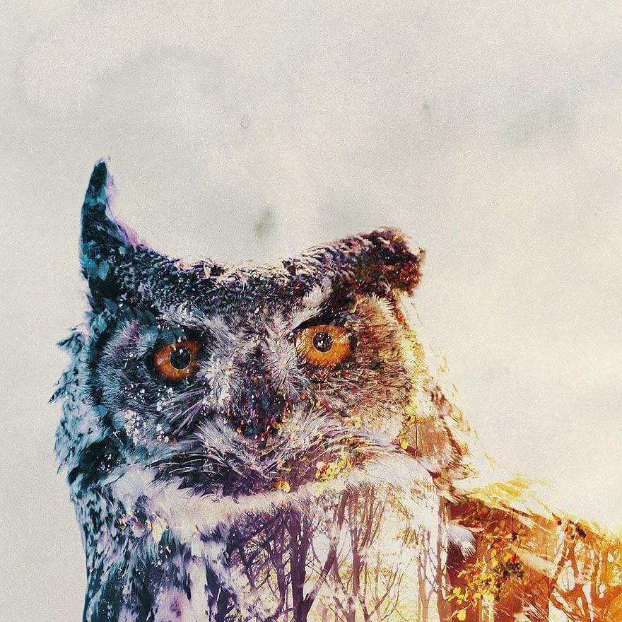 animales-naturaleza22